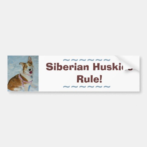 Husky siberiano hermoso en nieve etiqueta de parachoque