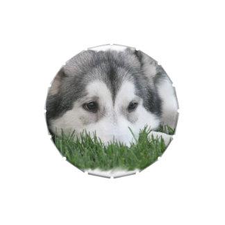 Husky siberiano jarrones de caramelos