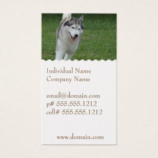 Husky siberiano lindo tarjetas de visita