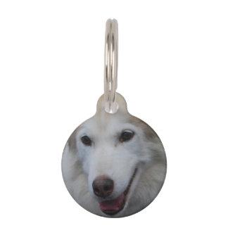 Husky siberiano placas de mascota