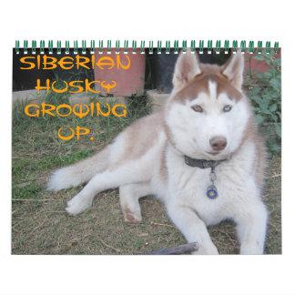Husky siberiano que crece calendario