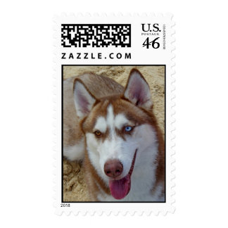 Husky siberiano sellos