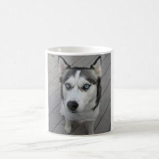 Husky siberiano tazas
