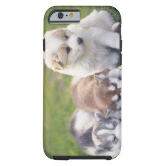 Husky siberiano; Una raza del perro de trabajo eso Funda De iPhone 6 Tough