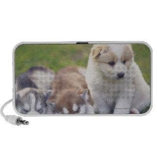 Husky siberiano; Una raza del perro de trabajo eso Mp3 Altavoces
