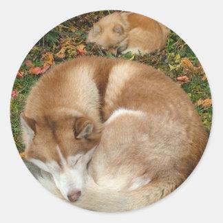 Husky siberiano y perro de Pomerania Pomeranian de Pegatina Redonda
