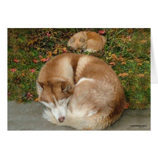 Husky siberiano y perro de Pomerania Pomeranian de Tarjeton