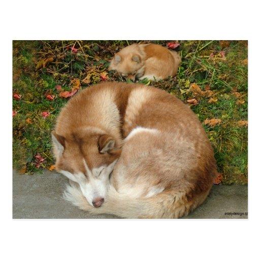 Husky siberiano y perro de Pomerania Pomeranian de Tarjeta Postal