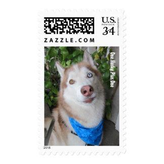 Husky Smile Postage