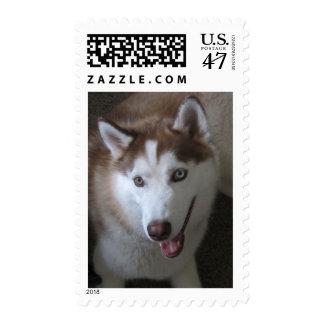 husky strking a pose postage