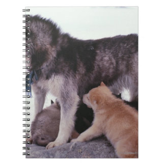 Husky with litter of pups notebook
