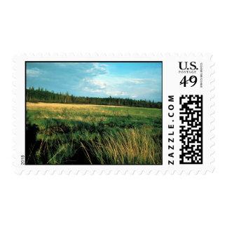 Huslia River Meadow Stamps