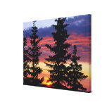 HUSTON PARK WILDERNESS, WYOMING. USA. Spruce Canvas Print