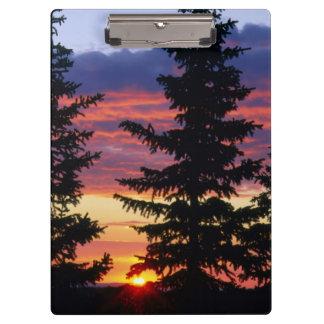HUSTON PARK WILDERNESS, WYOMING. USA. Spruce Clipboard