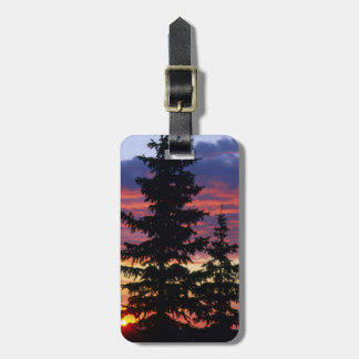 HUSTON PARK WILDERNESS, WYOMING. USA. Spruce Luggage Tag