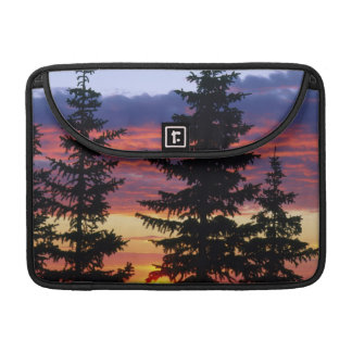 HUSTON PARK WILDERNESS, WYOMING. USA. Spruce Sleeves For MacBook Pro