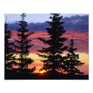 HUSTON PARK WILDERNESS, WYOMING. USA. Spruce Photo Print