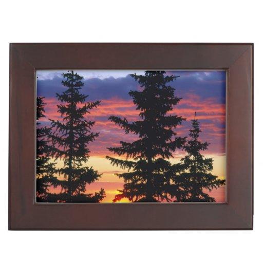 HUSTON PARK WILDERNESS, WYOMING. USA. Spruce Memory Box