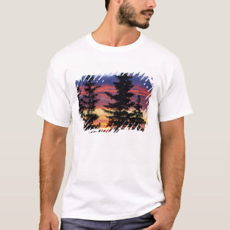 HUSTON PARK WILDERNESS, WYOMING. USA. Spruce T-Shirt