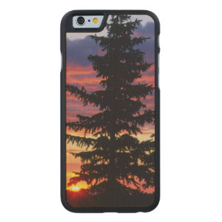 HUSTON PARK WILDERNESS, WYOMING. USA. Spruce Carved® Maple iPhone 6 Case