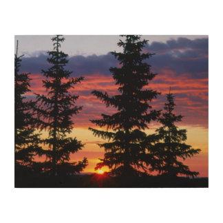 HUSTON PARK WILDERNESS, WYOMING. USA. Spruce Wood Print