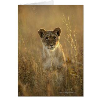 Hwange National Park, Zimbabwe. Cards