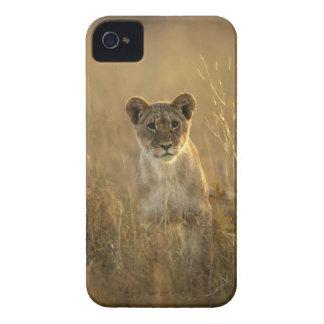 Hwange National Park, Zimbabwe. Case-Mate iPhone 4 Cases
