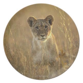 Hwange National Park, Zimbabwe. Party Plates