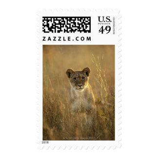 Hwange National Park, Zimbabwe. Stamp