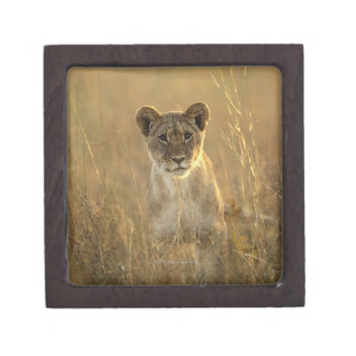 Hwange National Park, Zimbabwe. Premium Gift Box