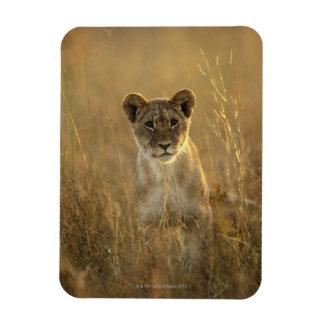 Hwange National Park, Zimbabwe. Magnets