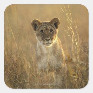 Hwange National Park, Zimbabwe. Sticker