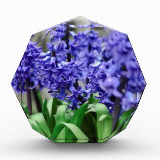 Hyacinth Acrylic Award