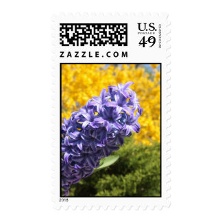 Hyacinth and Forsythia Stamps