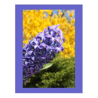 Hyacinth and Forsythia Postcard
