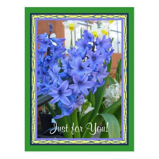 Hyacinth blue postcard