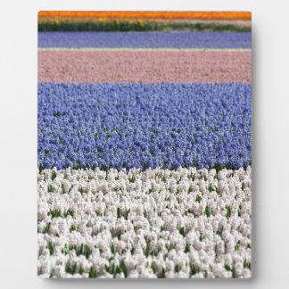 Hyacinth Field Display Plaque