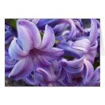 Hyacinth Flowers Greeting Card