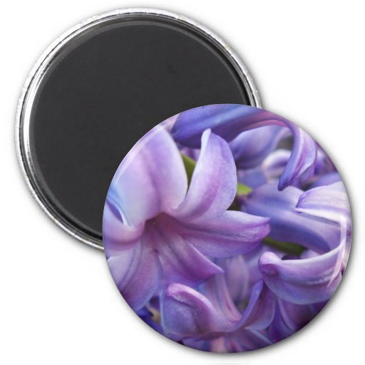 Hyacinth Flowers Round Magnet