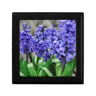 Hyacinth Gift Box