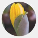 hyacinth in the garden classic round sticker
