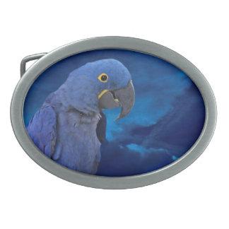 Hyacinth Macaw Belt Buckle Oval