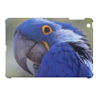 Hyacinth Macaw iPad Mini Cover