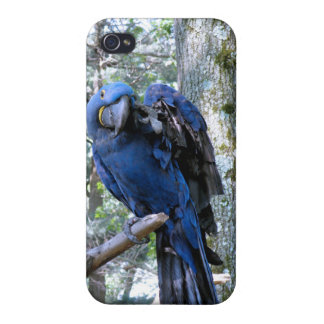 Hyacinth Macaw iPhone 4/4S Cover
