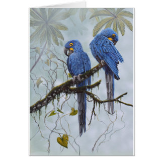 Hyacinth Macaw just for your special gifts Card