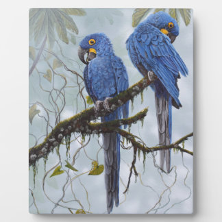 Hyacinth Macaw just for your special gifts Plaques