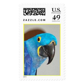 Hyacinth Macaw (Large) Postage Stamp