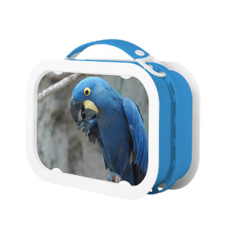 Hyacinth Macaw Lunchboxes