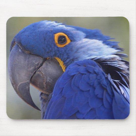 Hyacinth Macaw Mouse Pad