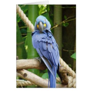 Hyacinth Macaw Notecard Greeting Card